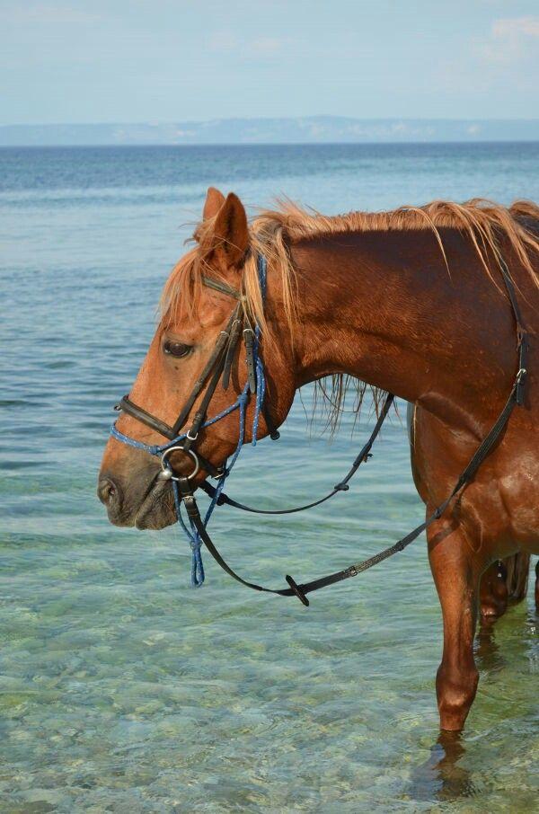 Samys Ranch Medulin Kroatien