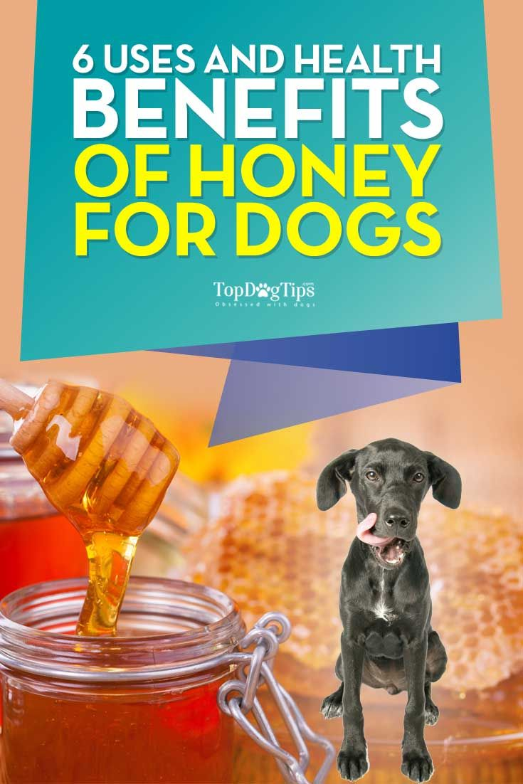 Best Uses and Health Benefits of Honey for Dogs