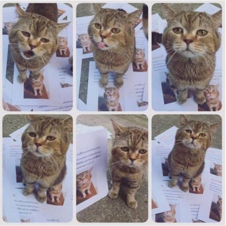 What a cute little boy! #cats #animals #kitten #cute