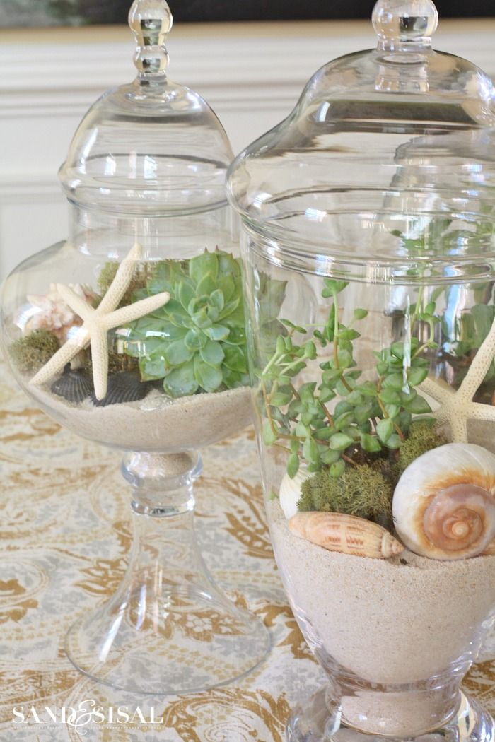 Succulents In Apothecary Jars   Water 1 X Month (5 Min Out Of Jar.