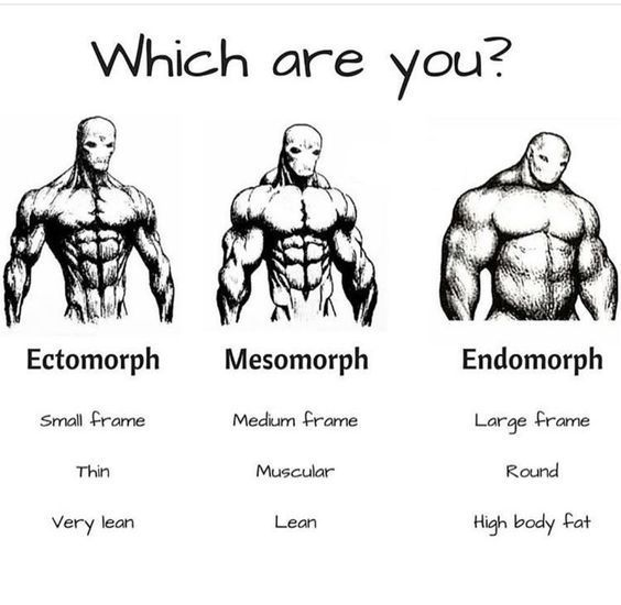 Types of fit body which are you from these body types