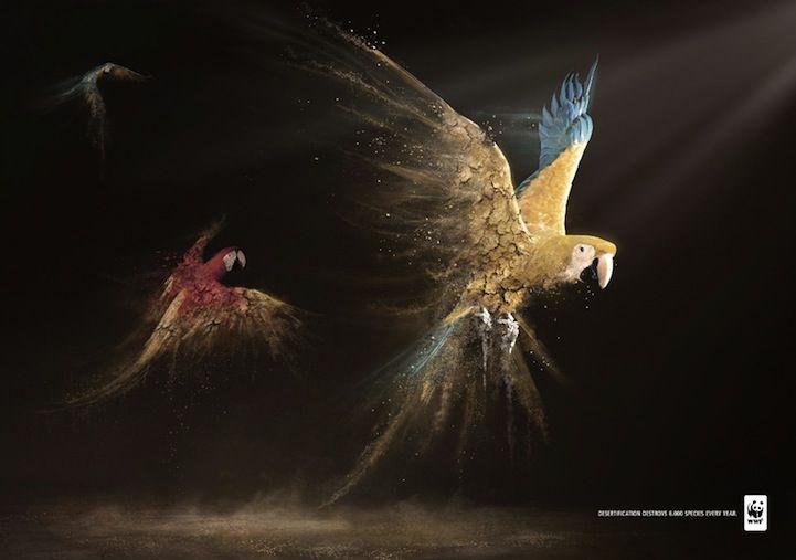 Parrots - Desertification Disintegrates Animals - WWF Publicity Campaign