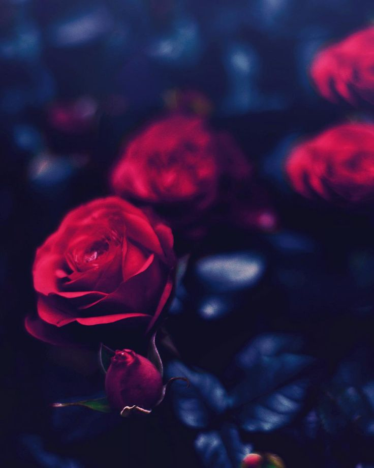 We can complain because rose bushes have thorns, or rejoice because thorn bushes have roses. -Abraham Lincoln