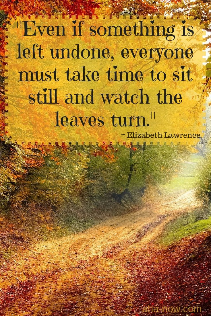 """Even if something is left undone, everyone must take time to sit still and watch the leaves turn."" ~ Elizabeth Lawrence"