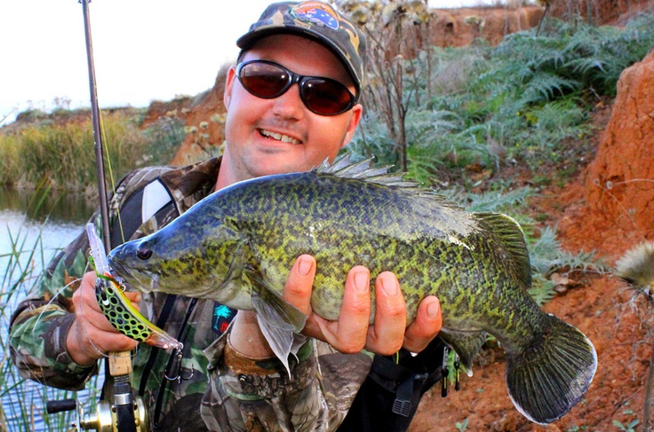 Lubin Pfeiffer landed this beauty clear water Murray Cod on a Balista fishing lure - featuring our patented LED technology.