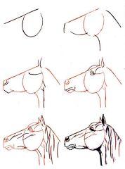 Dessiner un cheval : Comment faire ?