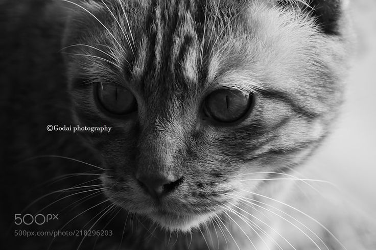 Street cats 316 - My twitter account:) https://twitter.com/godaiphotograph Godai photography  All photo rights are reserved Godai.