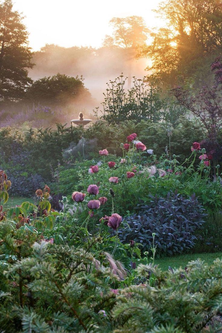 Dreamy garden ~ misty morning with the early rising sun creates a beautiful tone to a perennial garden.