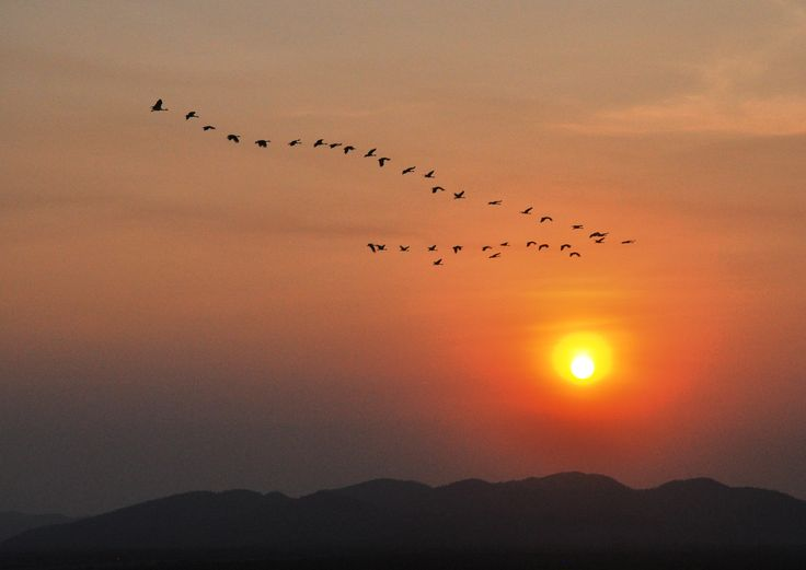 Birds in formation at sunset, Kununurra, Western Australia
