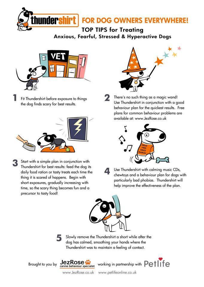 21 Best Thundershirt For Dogs Images On Pinterest