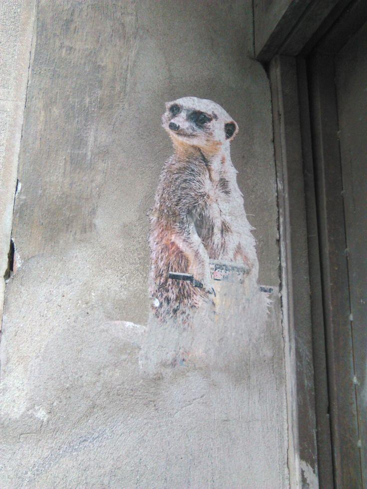 Street art, Szeged - Szurikáta