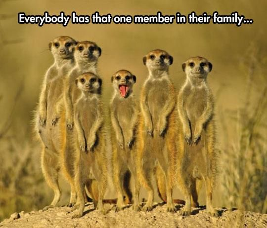 Everybody has that one person in their family... pic.twitter.com/7d2btrTVOM