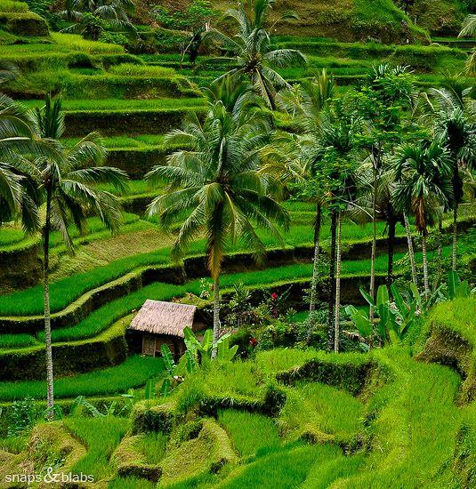 Bali, Indonesia. wow!
