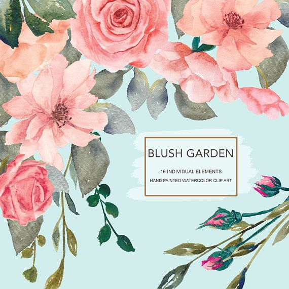 Blush Flower Clipart Watercolor Wild Rose Clipart Separate