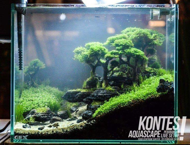 Diy Aquarium Decorations Themed Aquascaping Freshwater Decor Ideas Small Aqua Modern Aqua Aquarium Aqu In 2020 Aquarium Design Betta Fish Tank Aquascape Design