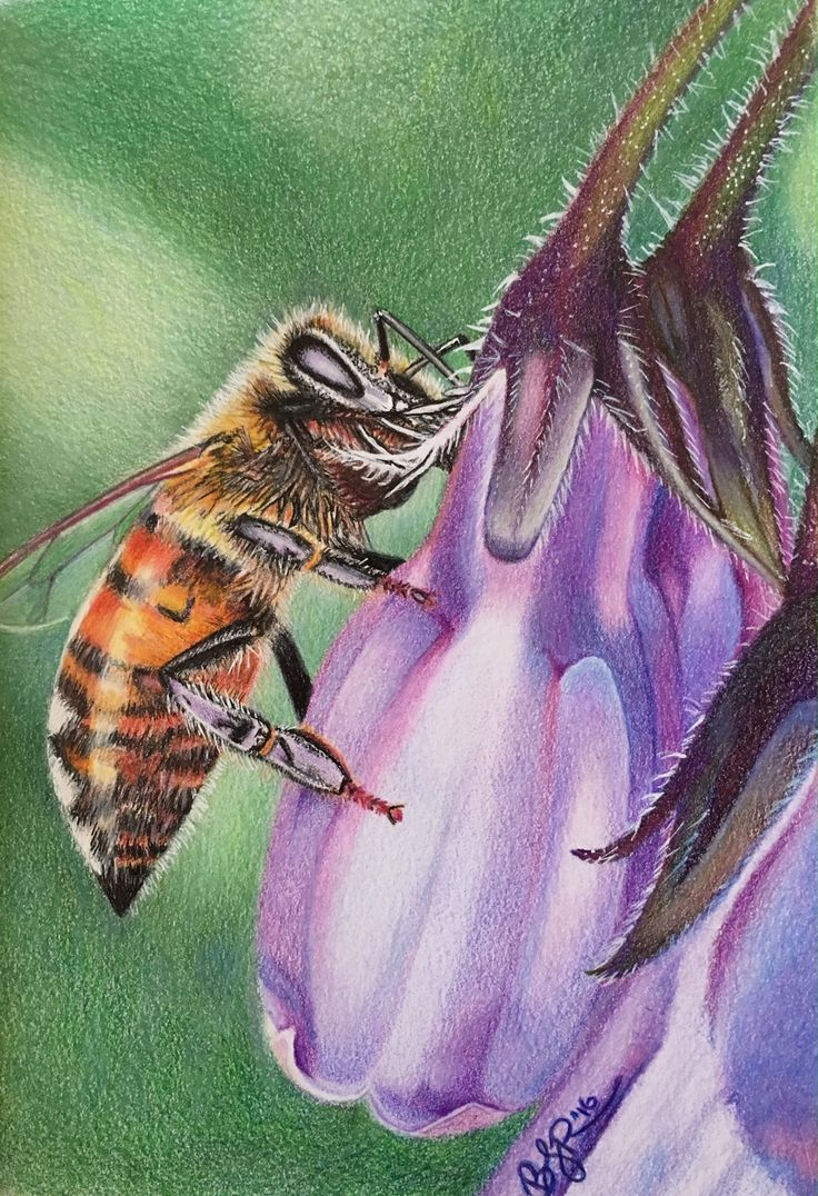 Ain't Mis-bee Havin - drawn in colored pencils, freehand, 6x8 inches.