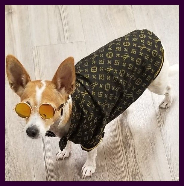 More Than 100 Mobilegroomingservice Pittsburghdog Dogswag Healthypets Dogcare Petvalu Woofgangbakery Spca Edmontonpets Daycaredogs Do Dog Swags Pets Pet Hacks