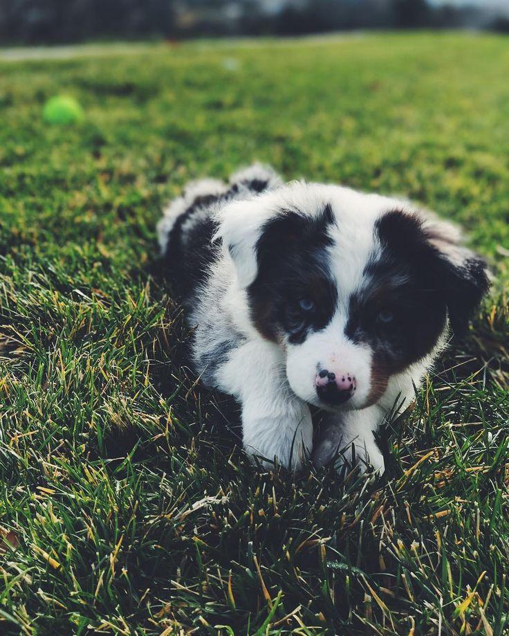 This pup.  https://www.instagram.com/p/BO367axAy7x/