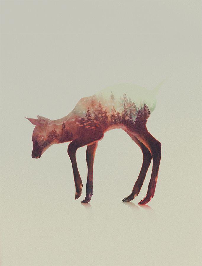 Andreas Lie est un artiste norvégien adepte des jeux de double exposition. En utilisant deux photographies différentes qu\\\'il allie, il créer une double exposition où paysages se fondent avec des animaux sauvages.Des montagnes enneigées se dessinant sur l\\\'échine de loups aux aurores boréales sur le pelage d\\\'unours polaire, les images ...
