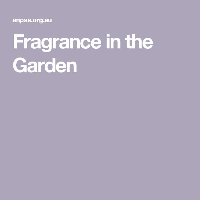 Fragrance in the Garden
