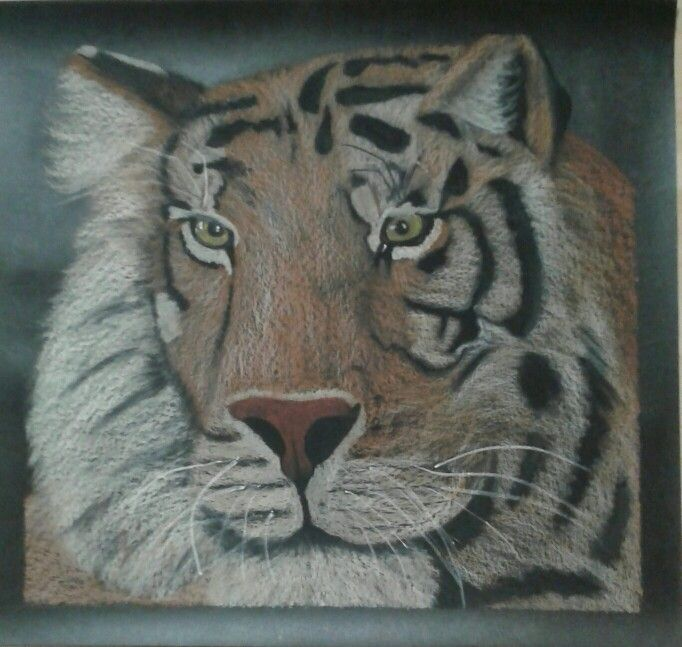 Tiger- Oil Pastel on Black Builders Paper