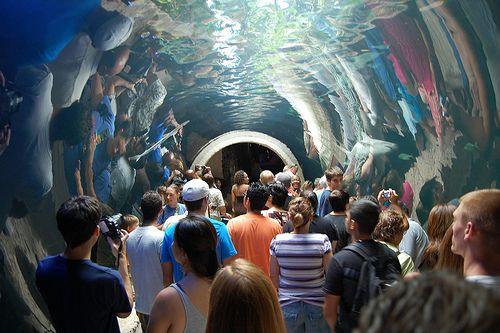 World's Greatest Aquariums    www.dwazoo.com    dallas world aquarium | Dallas World Aquarium