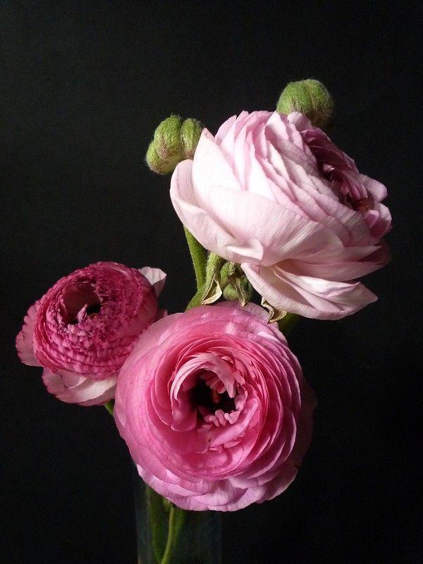 Renoncules Roses Pretty Flowers Beautiful Flowers Flowers