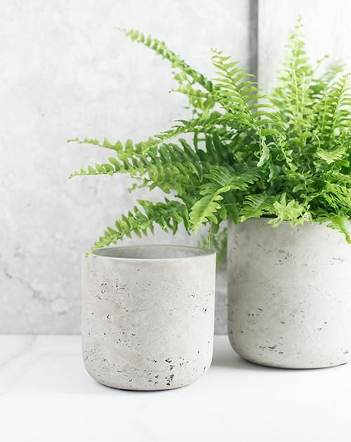 Straight Cement Pots | Philippa Craddock