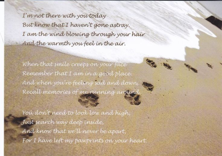For my precious Fluffy. You were the first furbaby to ...