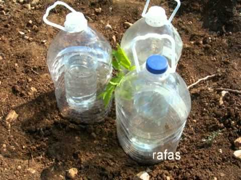 Reutilizando botellas plásticas - Está Bueno