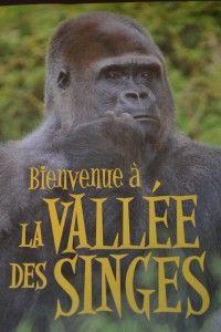 La Vallée des Singes | Inspirationdunjour.fr