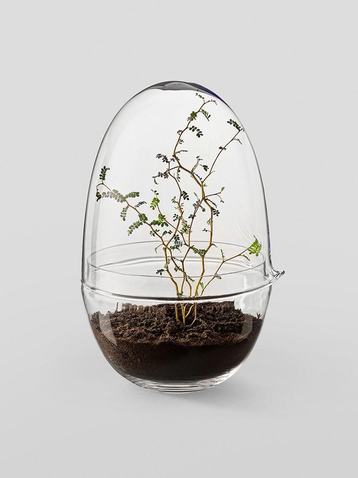 Ett växthus för naturens minsta blommor och en plantskola för första skedet i växternas liv. Grown miniväxthus är tillverkat av två glasdelar. Bottendelen håller jorden och växten. Den övre delen är ett lock försett med en pip, så att det även kan användas som en vattenkanna. Toppen fungerar också som en ventil och släpper in luft och reglerar fukt- och temperaturnivån inne i växthuset.