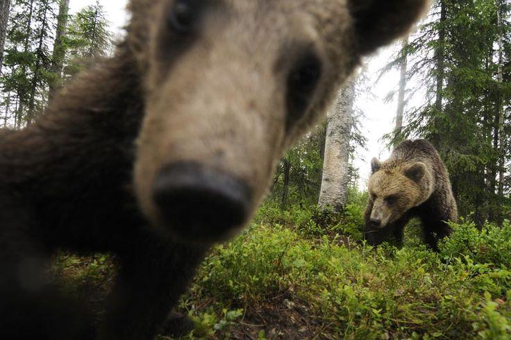 Slaap een nacht met bruine beren  - Finse meren (Doen!) - Finland - Droomplekken