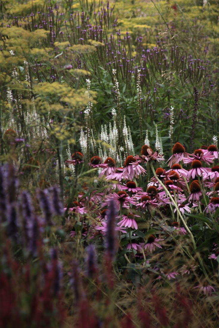 TuinTuin - weelderige tuin - border met dropplant en rode zonnehoed.