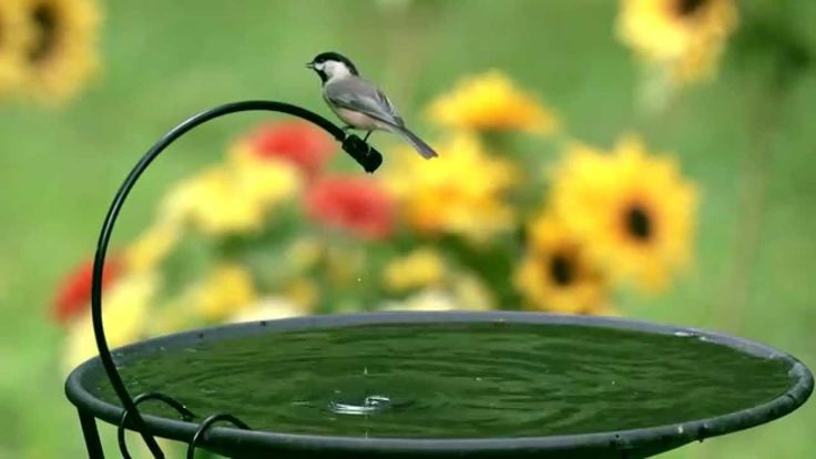Hanging Heated Bird Bath