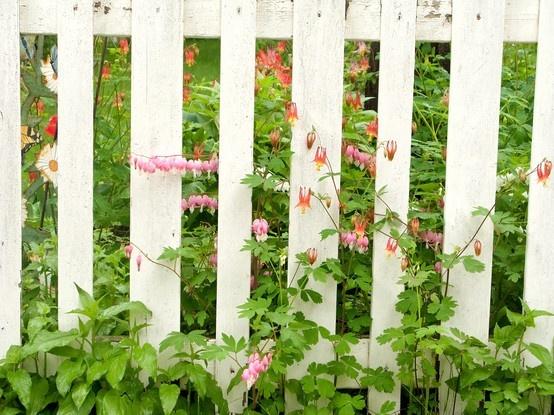 Bleeding Heart Fence