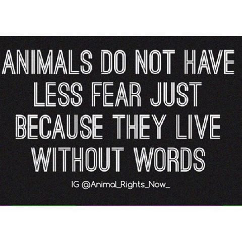 Animals Do Not Have Less Fear Just Because They Live Without Words