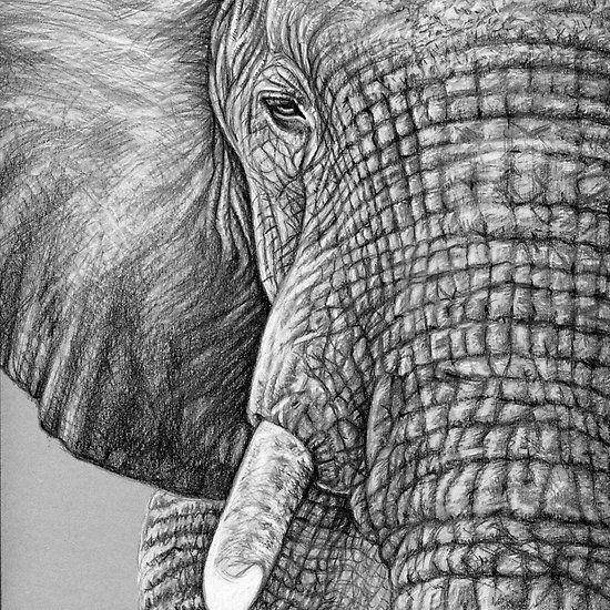 African Elephant - Afrikanischer Elefant