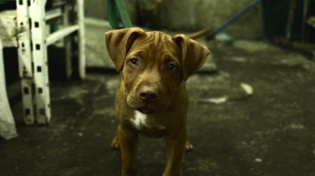 Rusty   Épisode 5   Animal cherche compagnie   CASA