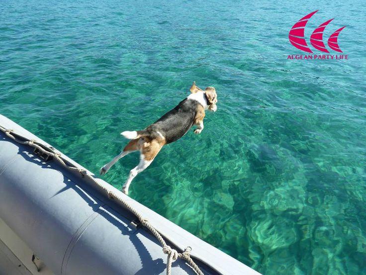 The brave dog !!