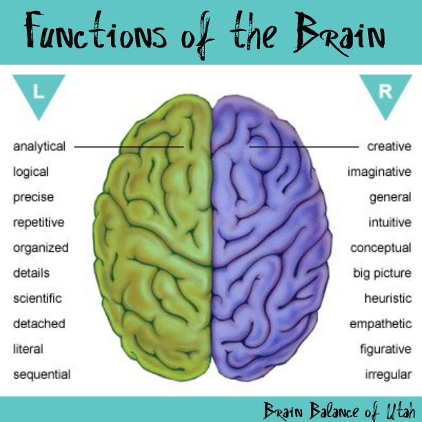Functions of the brain brainbalanceutah leftbrain rightbrain functions of the brain brainbalanceutah leftbrain rightbrain motivation inspiration pinterest brain and ap psychology ccuart Choice Image