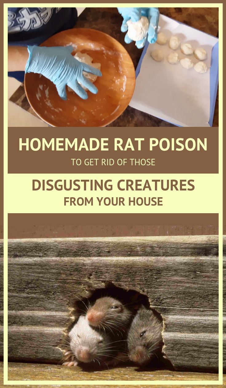 Homemade rat poison to get rid of those disgusting