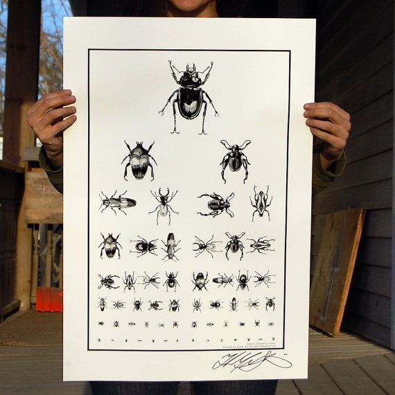 Beetle Optometry Poster Eye Chart Insect collection by HelenGotlib, $20.00