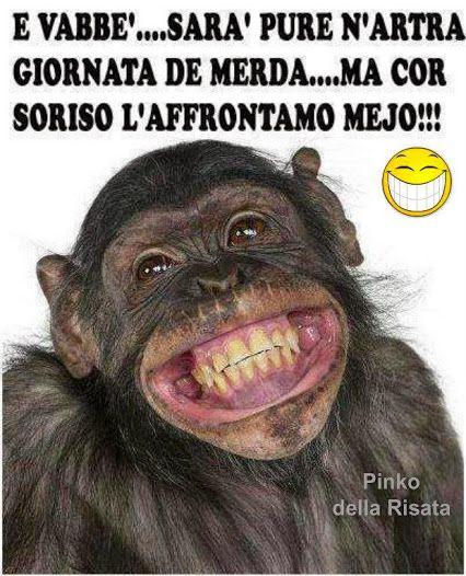 Oltre 25 fantastiche idee su Scimmie divertenti su Pinterest