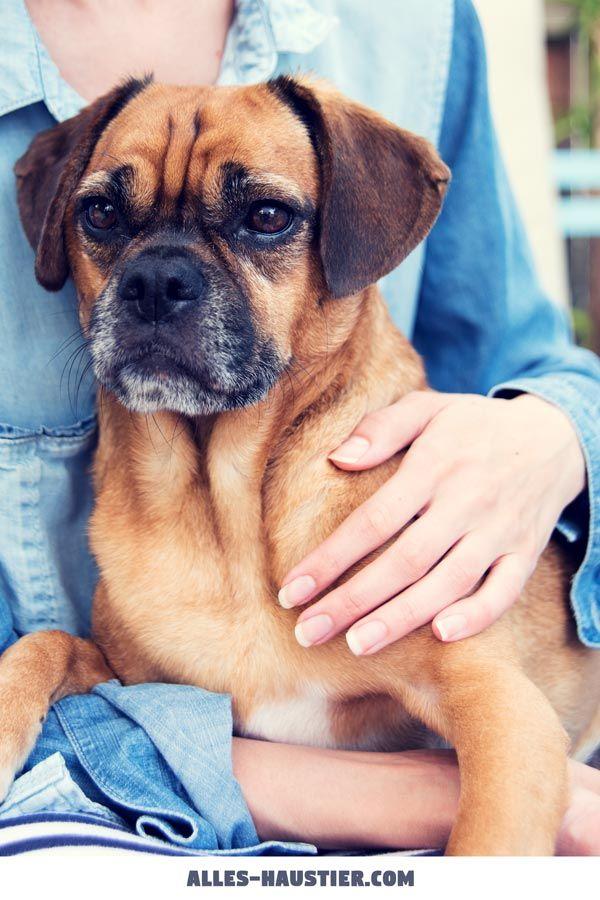 Diese 21 Total Susse Hunde Sind Einfach Zum Verlieben Welpen Hunde Susse Hunde Welpen