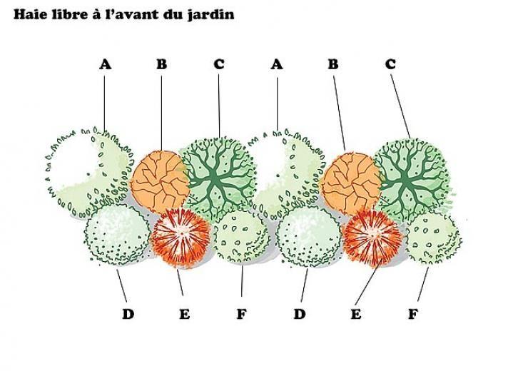 I. Francès - Rustica