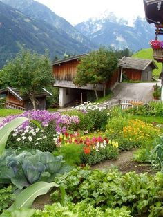 I don't know why, but I just love this mini farm, with the mountains in the background, and the little garden...