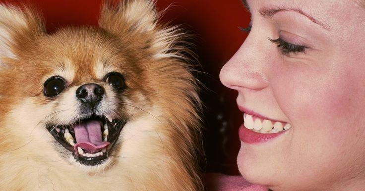Como fazer uma tosa leonina em um cachorro. Se você tem um cachorro de pelo comprido, como um Pomerano ou um Chow Chow, pode ser possível fazer-lhe uma tosa de leão. Essa tosa, que foi criada no século 17 para ajudar os cachorros a trabalhar na água sem que os pelos fiquem muito pesados, é caracterizada pela juba e pelo pom pom na ponta do rabo. É necessário fazer a limpeza dos pelos dos ...