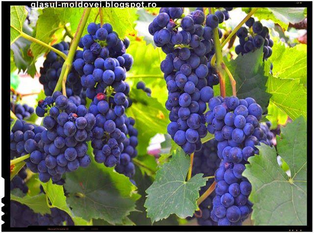 Din cauza unor presiuni ale statelor cu traditie in viticultura, in mod special a fermierilor francezi, care au remarcat ca in ultimii ani au ...
