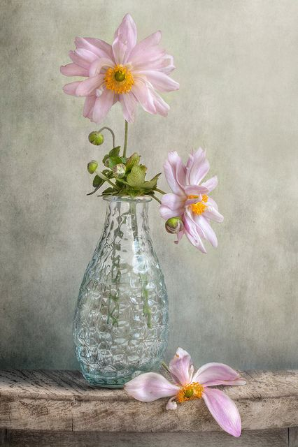 ❥by Mandy Disher